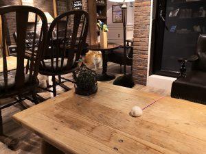 Katzen-Café
